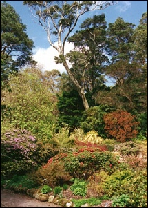 Inverewe Gardens: to go to links for Inverewe in Poolewe CLICK HERE